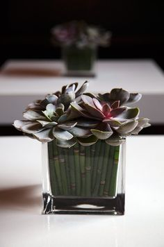 This simple and sustainable wedding centerpiece holds bamboo and a quartet of succulents- ideal for dressing up cocktail tables!