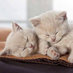 little blonde kitties, so precious