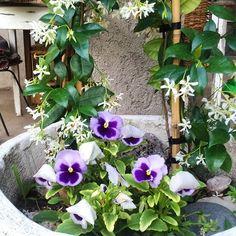 #pensamientos tan lindos son! #flores #jardín #jdn #manualesjardin #revistajardin #doñatita #garden #flowers