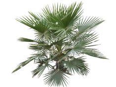 Fan Palm, Shrubs, Plant Leaves, Photoshop, Landscape, Architecture, Plants, Garden, Image