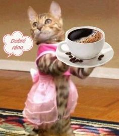 Happy Weekend Images, Good Morning Sunday Images, Good Morning Love, Best Coffee Roasters, Animals And Pets, Cute Animals, Coffee Vending Machines, Easy Landscape Paintings, Coffee Pictures