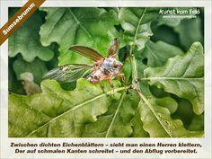 Kunst vom Feld: Sumsebrumm – www.kunstvomfeld.de