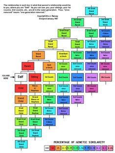 Picture Of Family Tree Chart Lovely Genealogy Chart Useful for Understanding the Times Genealogy Forms, Genealogy Sites, Genealogy Chart, Genealogy Research, Family Genealogy, Genealogy Humor, Family Tree Research, Family Tree Chart, Family Trees