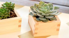 sake box - Google Search