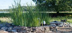 Biologisk avloppsrening - Alnarp Cleanwater