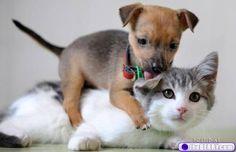 cute-animals-3