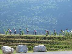 Passage du Roll'athlon le matin © CCBS Rhone, Sport, Dolores Park, Travel, Rowing, Deporte, Viajes, Sports, Destinations