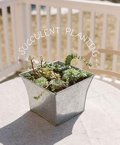 Succulent Planting 101