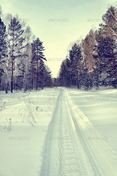Snowy road for snowmobiles in a winter pine forest ...  Rut, bark, beautiful, beauty, blue, branch, bright, brightly, climate, cold, color, day, forest, frost, frozen, glade, groove, high, image, landscape, lane, light, natural, nature, nobody, outdoor, pine, road, rural, russia, season, shadow, siberia, sky, snow, snowy, solitude, sunlight, thick, track, tranquil, tree, trunk, vertical, way, white, wilderness, winter, woods