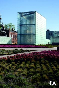 Kwitnący Rozchodnik Okazały (Sedum spectabile) na tle Muzeum Śląskiego - polecam, arch. Riegler Riewe Architekten z Grazu, fot. architektKA, KAtowice.