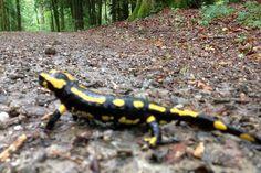 Looong way to go. Reptiles, To Go, Wildlife, Hiking, Outdoors, Animals, Instagram, Walks, Outdoor