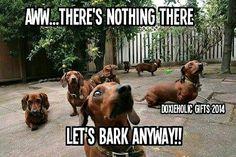 Bark Anyway