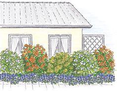 KORDES Rosen Pflanzvorschlag mit Strauchrosen Die schönsten Rosen der Welt
