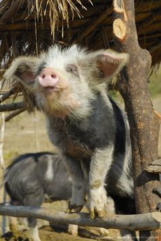 When pigs fly .... it´s heaven on earth, friends, no food.