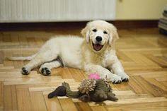 Say chhheeeesseee #cutedogs  #puppies