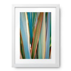 Rain on Harakeke Leaves (New Zealand Flax) New Zealand Flax, Photography For Sale, Rain, Leaves, Canvas, Image, Decor, Rain Fall, Tela