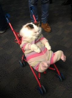 When your PJs are just too comfy to change out of in order to leave your house. | 21 Times Cats Were You IRL