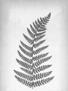fern tattoo - Google Search