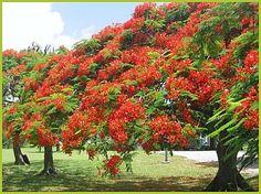 Image detail for -Ile de la REUNION : jardins, sites naturels, palmiers avec les Fous de ...