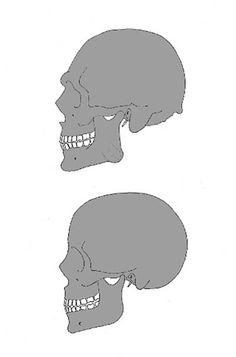 Schedelanalyse  Mannen hebben gemiddeld gezien vaker een wat schuin verlopend voorhoofd en zijn wat robuuster gebouwd boven de neus en ogen (wenkbrauwwallen). Globaal gesteld is de schedel bij de man vaak groter en zwaarder, bezit robustere spieraanhechtingsplaatsen, bezit minder een tendens om jeugdige kenmerken vast te houden en maakt vaak een minder ronde indruk dan de schedel van de vrouw. Geslachtskenmerken komen heel variabel voor, het is mogelijk dat een mannelijke schedel kenmerken…