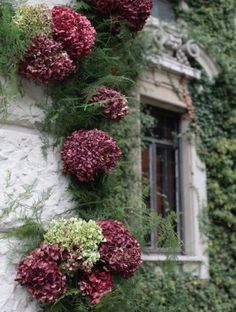 Old world window framed by gorgeous flowers. #windows