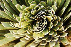 Title  Natures Abstract   Artist  Nancy Stein   Medium  Photograph - Photograph