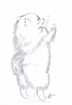 Pomeranian Paintings | Pomeranians Pomeranian