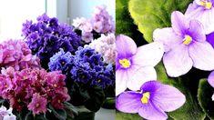 Přírodní hnojení Plants, Plant, Planets