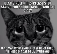 I still love you crazy cat ladies, stay strong! #catladies #crazycatladies #catmeme
