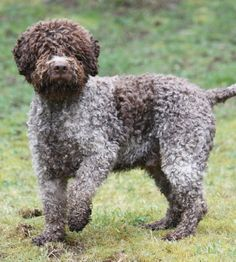 [Paws & Awws] Rare Dog Breeds - In a League of Their Own   The Smart Living Network