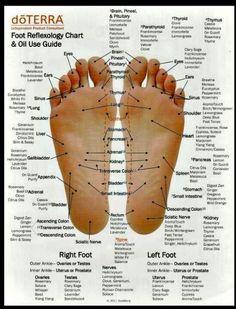 doTERRA Foot Reflexology Chart