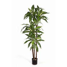 Plantas Artificiais – Dracaena Fragrans | Darden | Importação, Produção e Comercialização de Plantas e Árvores Artificiais