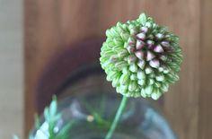 Flower | Peet likes