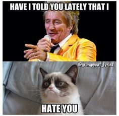 42dfc484a588629a3a7e64a00556c464 grumpy cat funny stuff ♫ have i told you lately that i love you ♫ ~ rod stewart s