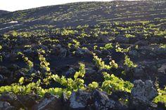 Wine ..  La Palma #Canarias