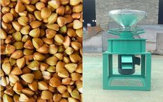 Buckwheat sheller machine, it is used for raw bitter buckwheat. Buckwheat shell in the process of working procedure. Skype:grainoilmachine;   Email:grain_oil@outlook.com