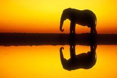 Etosha Natonal Park, Namibia - Elephant