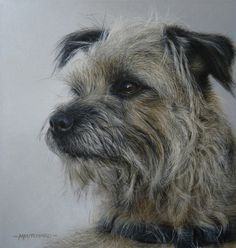 'Distracted' Study of a Border Terrier by Marc Mitchard