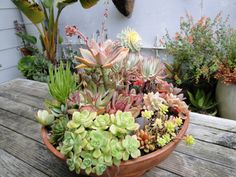 Succulent | Potted Plant Society