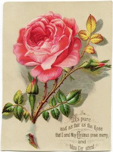 victorian christmas card, old fashioned floral image, pink rose graphic, vintage printable holiday image, antique christmas clip art