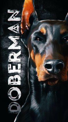 Doberman Dog - iPhone Wallpapers