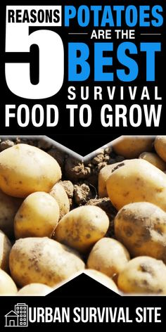 Potatoes may be the ultimate urban survival crop. They are rich in carbohydrates, protein, and nucleic acid. What's more is that potatoes are easy to grow, they can handle a variety of soil conditions and climates, they store well, and they can be prepared in many ways. #urbansurvivalsite #survivalfood #emergencyfood #survivalgarden #survivalgardening