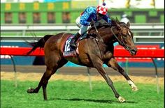 Makybe Diva Melbourne Cup 2003