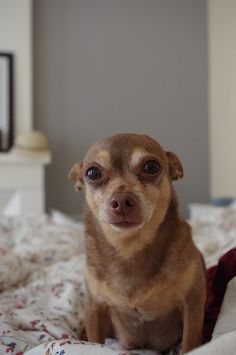 Tico by chez loulou, via Flickr  Reminds me of my babies.