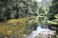 Parque das Neblinas - São 1,6 mil hectares, com 400 nascentes de rios, 1, 4 mil espécies da Mata Atlântica e uma rica fauna local.