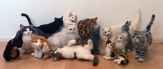 I love this artist's work - she really captures the essence of cats - stunning needle felted creations by Nel Vicoletto.