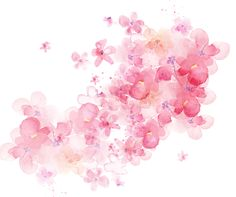 watercolor flowers shading, Pink Flowers, Watercolor, -painted Material PNG and PSD Watercolor Rose, Watercolor Design, Watercolor Background, Watercolour Painting, Painting Flowers, Flower Images, Flower Art, Art Floral, Artwork Design