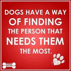 Dogs have a way of finding the person that needs them the most ...