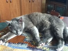 Doing a puzzle is hard work!  Let's take a nap!