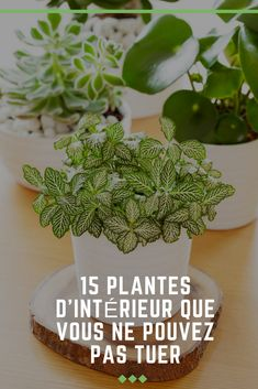 If you like plants, but you do not have the thumb . Si vous aimez les plantes, mais que vous n& malheureusement pas le pouce… If you like plants, but you do not have a green thumb, here are 15 indoor plants that are perfect for you. Planting Succulents, Potted Plants, Planting Flowers, Jade Tree, Flower Pot Design, Garden Online, Decoration Plante, Best Indoor Plants, Spider Plants